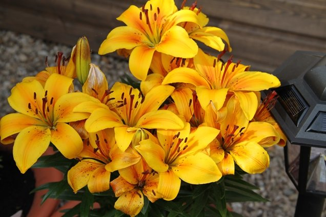 hallmark in bloom3