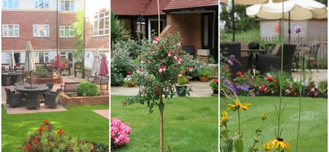 Hallmark Care Homes; Anya Court, Alexandra Grange and Ty Enfys shortlisted for national gardening award