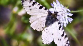 Anya court residents visit local Butterfly Farm